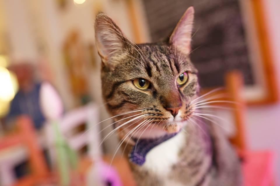 Caruso im Katzencafe